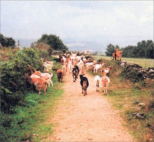 Gehen ans Ende der Welt <br />– Auf dem spanischen Jakobsweg –