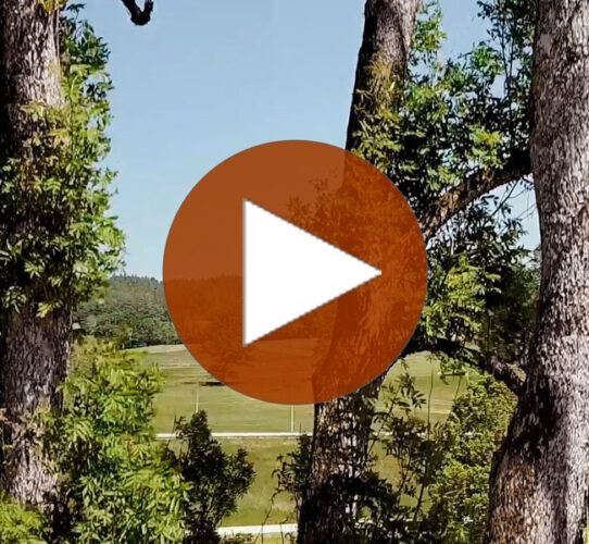 Talking Trees – Die Esche
